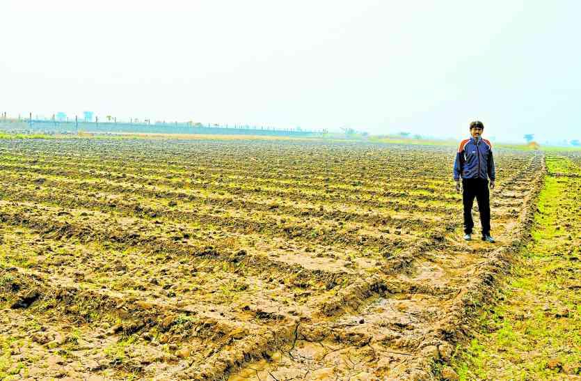 यहां के किसानों को रास आया जीरा, चार साल में 98 से बढ़ 150 हैक्टेयर में हुई बुवाई