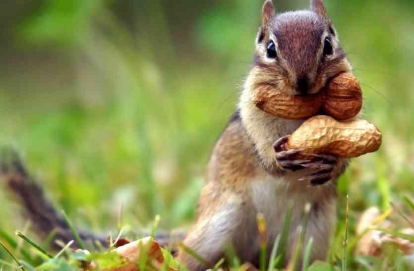 गिलहरी के खिलाफ इस आरोप पर मामला दर्ज, जाना पड़ा जेल