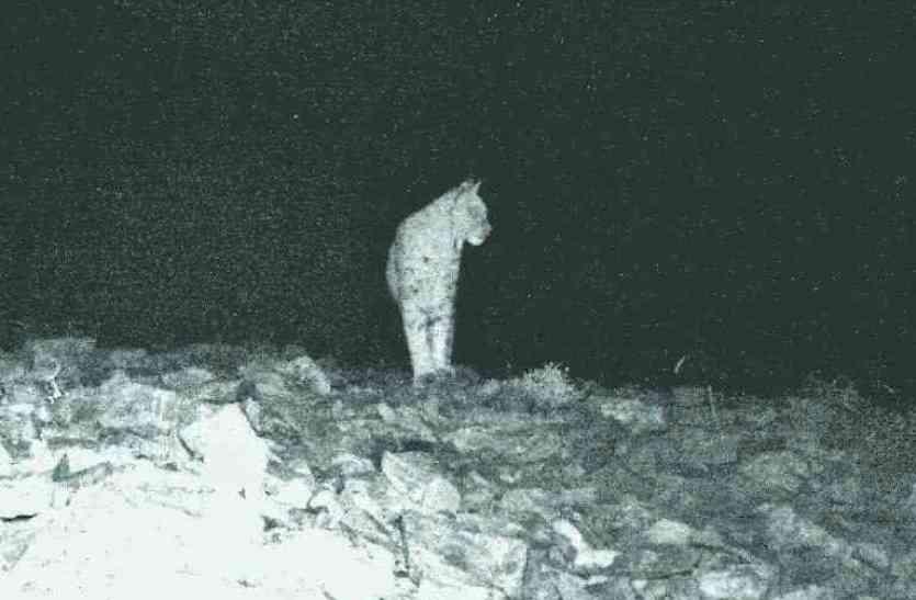 वन विभाग ने जंगल में लगाया कैमरा, फिर कैद हुआ कुछ ऐसा कि सब रह गए हैरान