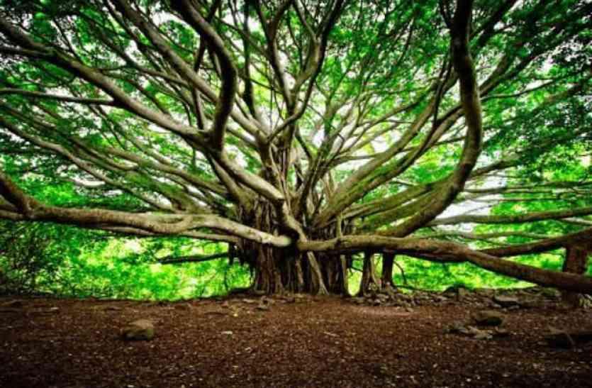 जब आएगी प्रलय और दुनिया का हो जाएगा खात्मा, तब भी जिंदा रहेगा सिर्फ ये पेड़, वजह हैरान कर देने वाली है