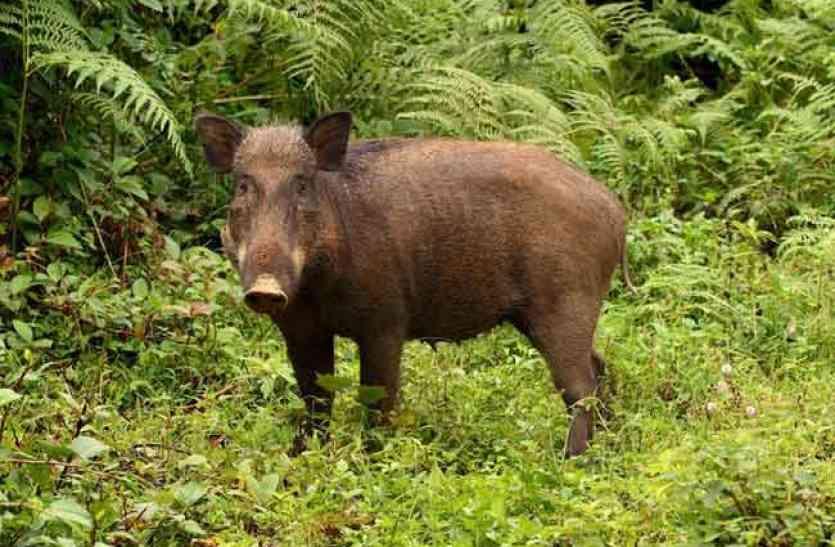 जंगली जानवर की आंत से निकली ऐसी चीज़, पल भर में करोड़पति बना किसान