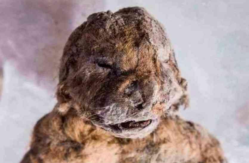 संभव हुई असंभव मानी जाने वाली चीज़, मिला 55000 साल से दफ्न जीव, लेकिन अब वैज्ञानिक हैं हैरान