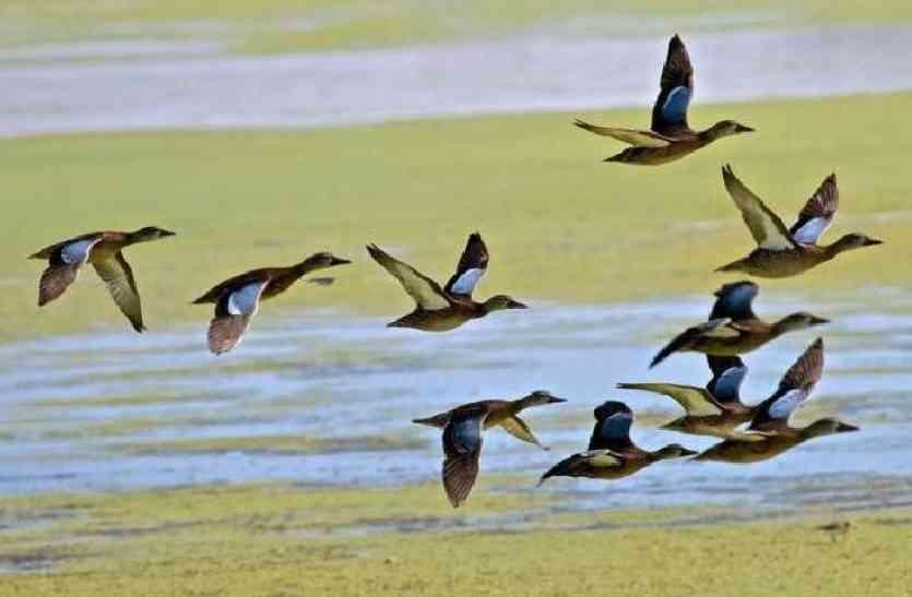 UDAIPUR BIRD FESTIVAL 2017: राजस्थान में पहली बार होने जा रही है बर्ड रेस, आप भी देखना चाहते हैं तो चले आइए उदयपुर