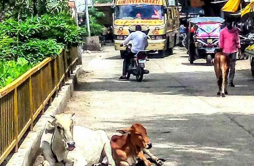 सड़कों पर घूम रहे आवारा मवेशी, यातायात में पहुंचाते है बाधा