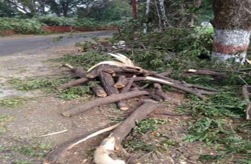बिजली की लाइन डालने के लिए काटे जा रहे पेड़, रहवासियों ने किया विरोध