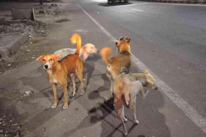 dog bite cases in jodhpur