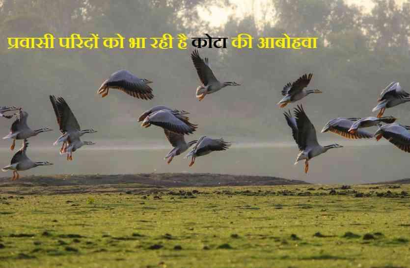 सबसे अधिक ऊंचाई पर उड़ने वाले विदेशी मेहमानों ने राजस्थान व मध्यपद्रेश के संगम पर बनाया डेरा