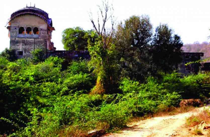 पुरखों के घर में गूंजी दहाड़, उजड़े चमन में लौटी बहार रामगढ़ पहुंचा बाघ टी-91