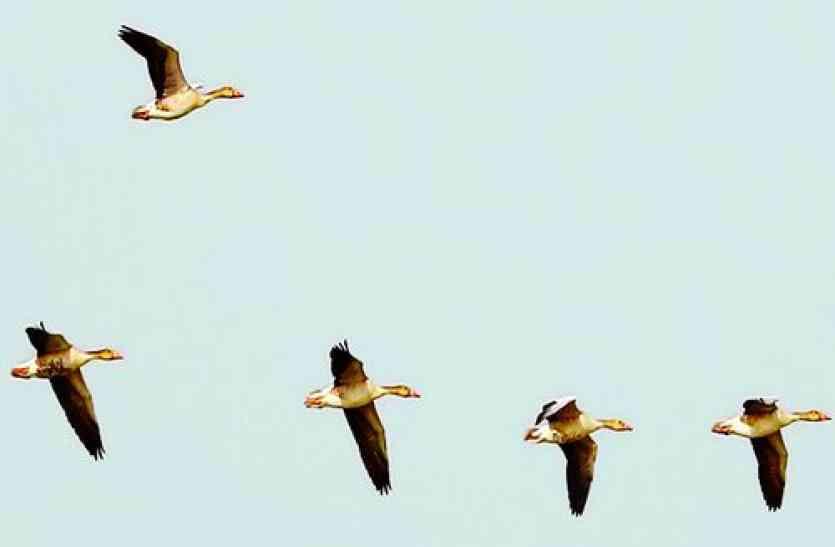 गांवों में दिख रहे नए विदेशी पक्षी, इन देशों से आ रहे हैं