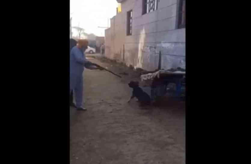 पंजाब में गोलियों से मार कर कुत्ते की हत्या, वायरल हुआ वीडियो
