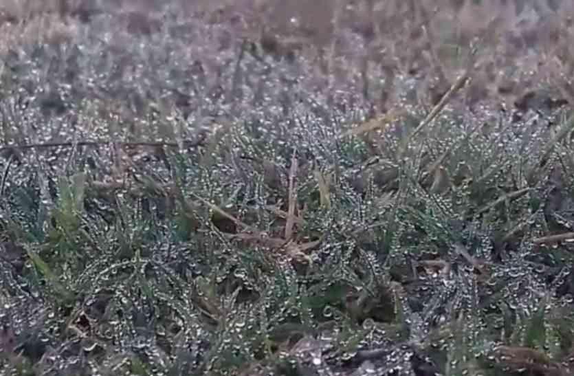 VIDEO ठिठुरा शेखावाटी : सीकर के खेतों में जमी बर्फ, न्यूनतम तापमान 0.5 डिग्री सेल्सियस