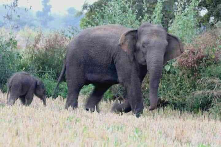 elephant in chhattisgarh