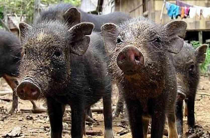 मध्यप्रदेश के इस शहर में जानवर को मारने पर मिलेंगे 399 रुपए, जानिए क्या है पूरी स्कीम