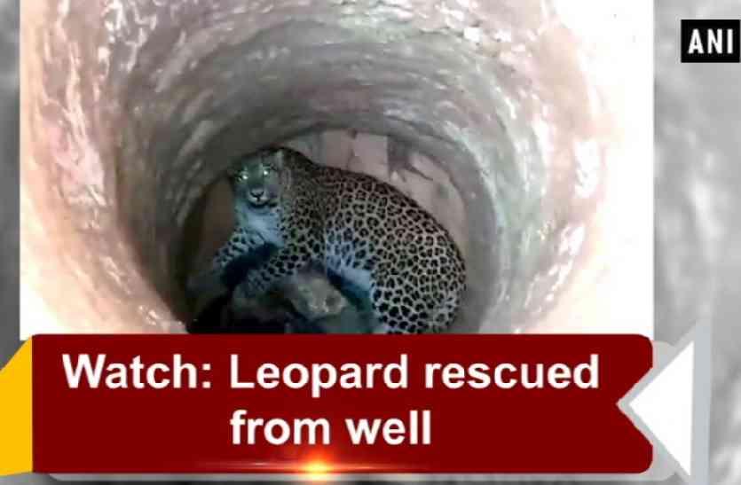 Video: कुंए में गिरा तेंदुआ, इस तरह से वन विभाग ने किया रेस्क्यू