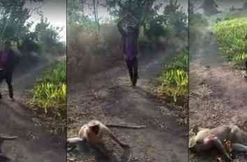 लंगूर को बेहरमी से मारने वाला यह शख्स मुसलमान नहीं, आरोपी का नाम सुनेंगे तो आपको और नफरत हो जाएगी... देखें वीडियो
