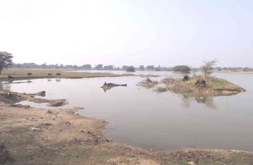 मेवाड़ में पक्षियों के लिए जन्नत हैं बड़वाई तालाब, यहां पहुंचते हैं प्रवासी पक्षी