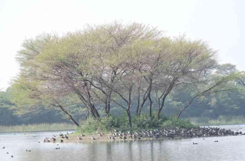 Udaipur Bird Festival: सारस की तेज आवाज आए तो जानिए किशन करेरी आ गया