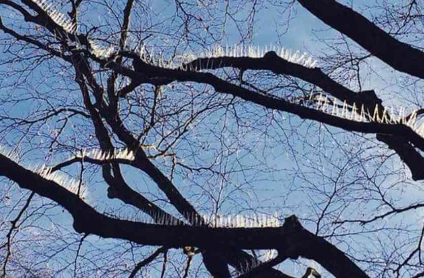 पेड़ पर आशियाना बनाए परिंदों से चिढ़ रहा था ये शख्स, फिर पार की दरिंदगी की सभी हदें