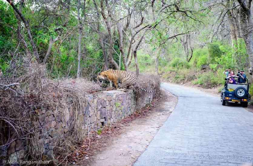 विंटर वैकेशन में श्योपुर के लिए मुफीद राजस्थान के पर्यटन स्थल