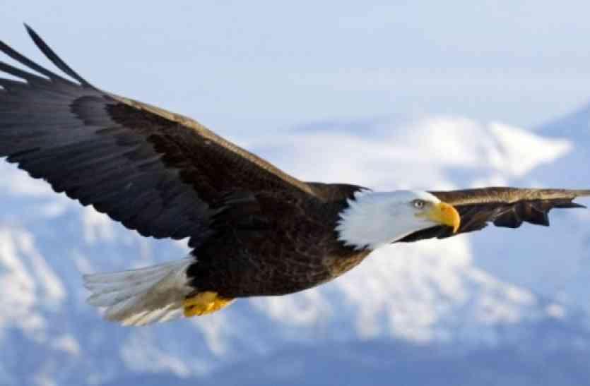 BIRD FAIR: गरुड़ सहित टीमों के नाम हुए घोषित, कल से शुरू होगा बर्ड फेयर