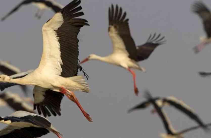 VIDEO बर्ड फेस्टिवल विशेष : वैज्ञानिकों एवं पक्षीविदों का पसंदीदा स्थल है बर्ड विलेज मेनार