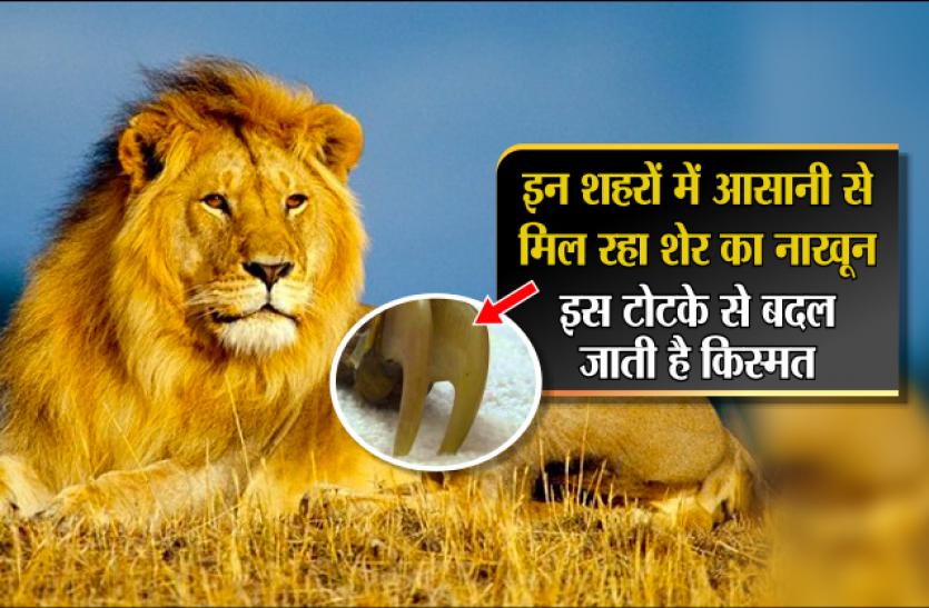 sher ka nakhun lions nail price benefits and black magic