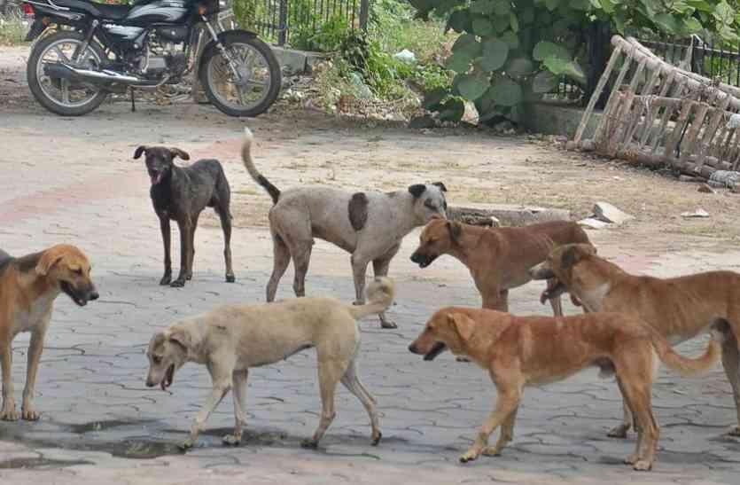 नगर पालिका की टीम पर कुत्तों ने किया हमला