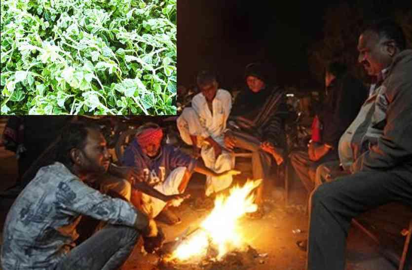 दौसा में जमी बर्फ, अब राजधानी की बारी! बीती रात जयपुर की सबसे सर्द रात