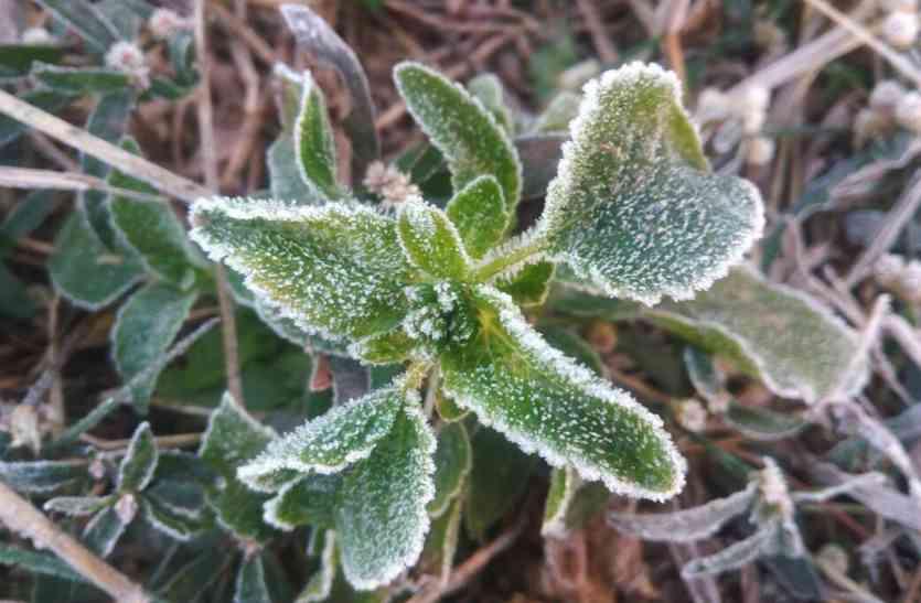 फसलों पर जमने लगी बर्फ की चादर
