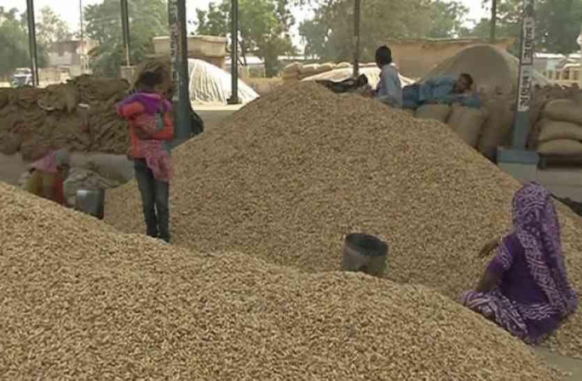 अब मूंगफली बेचने वाले किसानों को नापनी पड़ेगी इतने किलोमीटर की दूरी