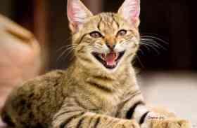 बिल्ली को बचाने के चक्कर में शख्स ने उठाया ये खौफनाक कदम, कोर्ट ने सुनाई 7 साल की सजा