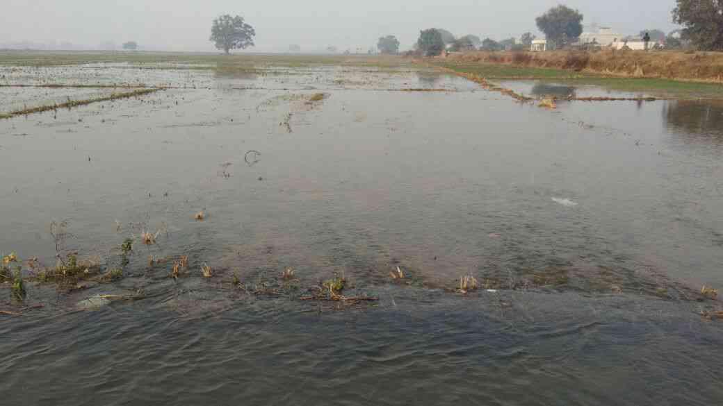 farmers Farm drown in flood