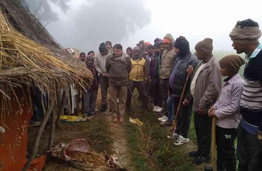 तेंदुए ने इस गांव में किए कई शिकार, फैली दहशत...