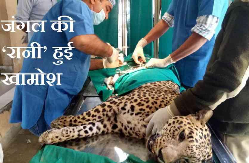उदयपुर के सज्ननगढ़ बायो पार्क की पैंथर 'रानी' हमेशा के लिए खामोश, बीमारी से हुई मौत