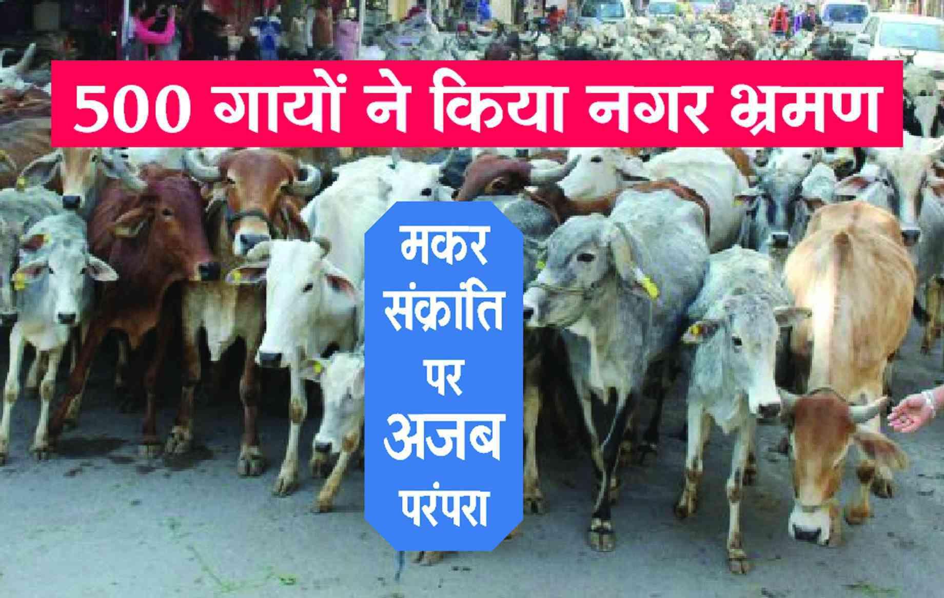 Rajsamand news,Rajsamand Hindi news,Rajsamand local news,rajsamand latest hindi news,rajsamand latest news rajsamand,Latest News rajsamand,Latest hindi news rajsamand,