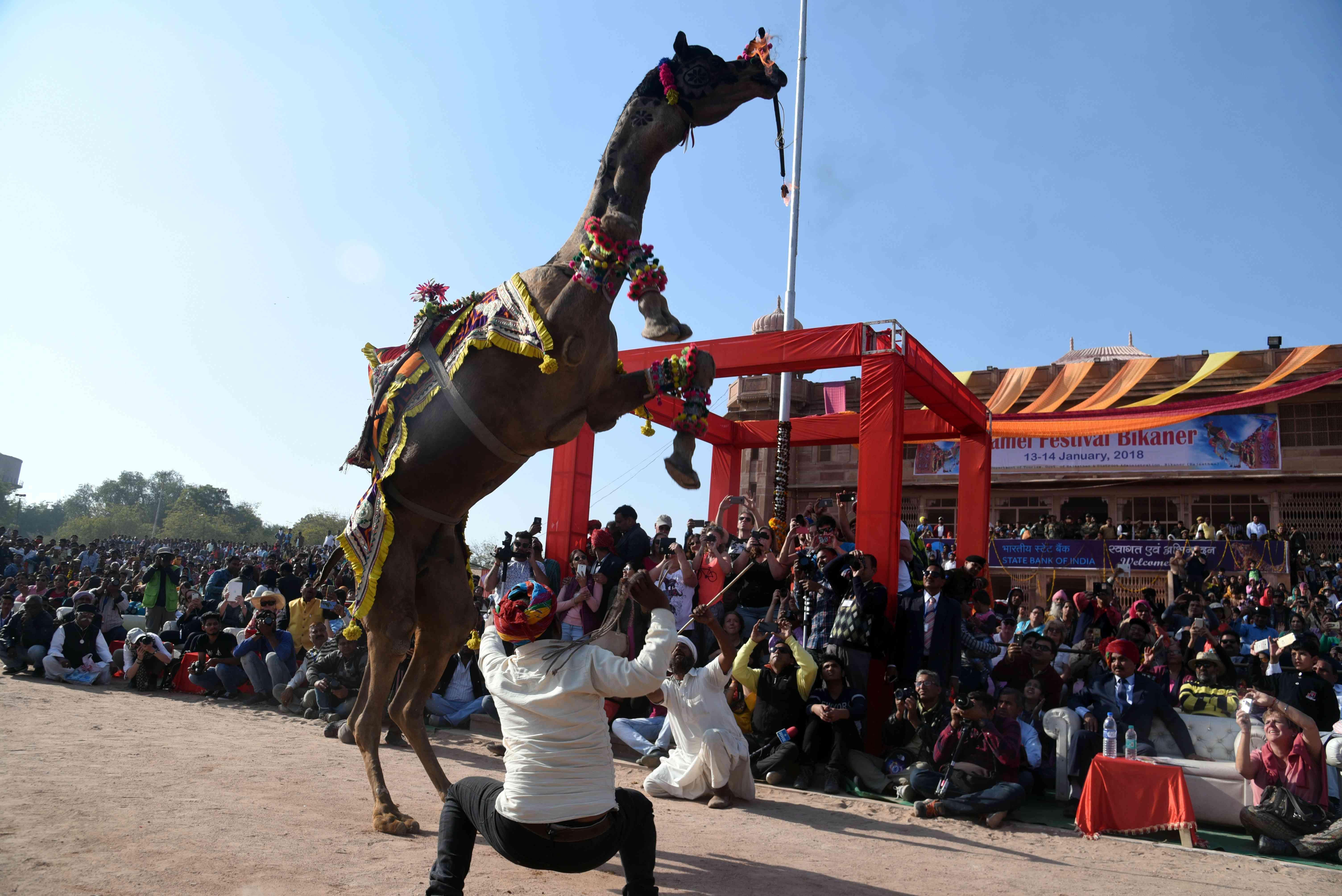 camel dance