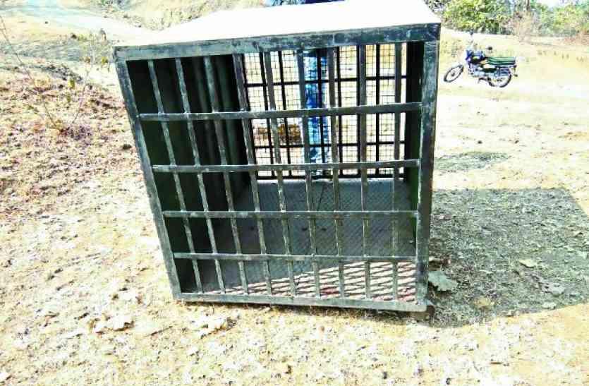 बंद पिंजरे से आदमखोर तेंदुए को चुनौती... आला अधिकारी भी हैं हैरान