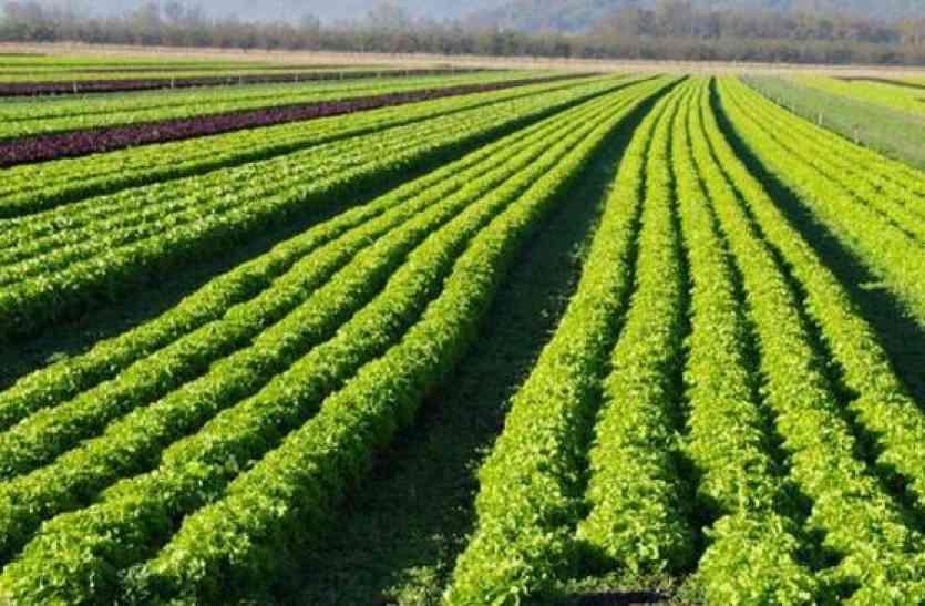 कुचामन के किसानों ने जैविक खेती से बनाई दूरी