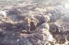 झोंपड़े में लगी आग, एक वृद्ध सहित 45 पशुओं की मौत, सालासर थाना क्षेत्र की घटना