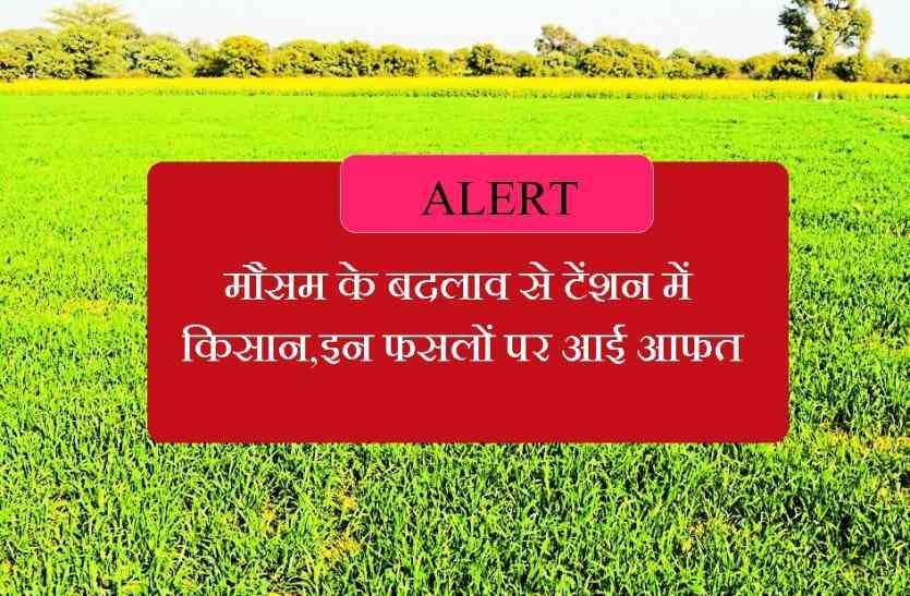 मौसम के बदलाव से टेंशन में किसान,इन फसलों पर आई आफत,विशेषज्ञों की ये चेतावनी होश उड़ा देगी