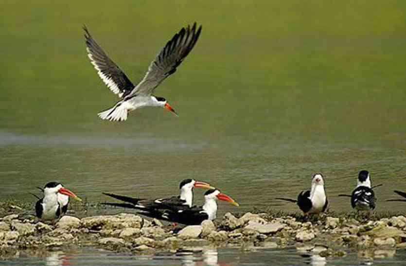 अलग-अलग होगी पक्षियों और जलीय जीवों की गणना