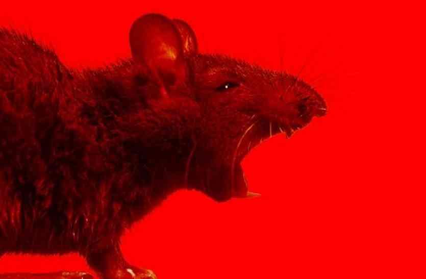 अब चूहें भगाने के लिए किसी और चीज़ की ज़रूरत नहीं, आपका स्मार्ट फोन ही है काफी
