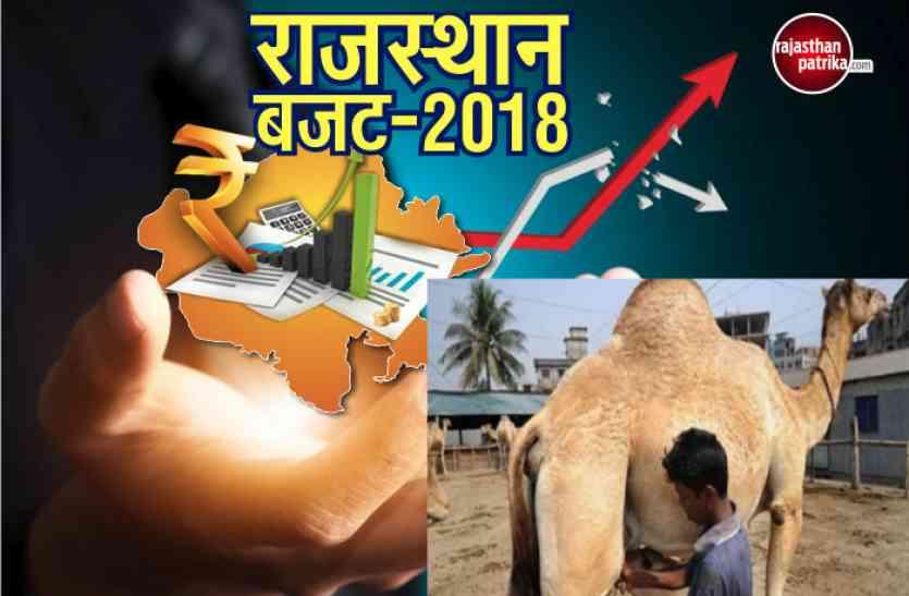 Rajasthan Budget 2018: अब ऊंटनी का दूध सुधारेगा सेहत, 5 करोड़ की लागत से तैयार होगा मिनी प्लांट