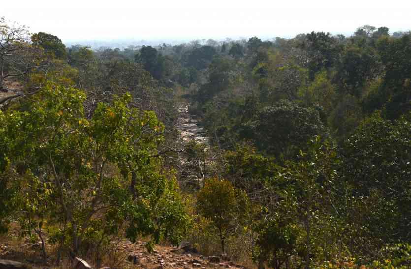 घोघरा के जंगल में घूम रहा Tiger, मिले फुट प्रिंट