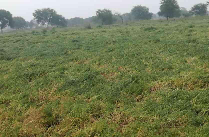 किसानों ने एसडीएम से कहा कि फसल पूरी बर्बाद हो गई