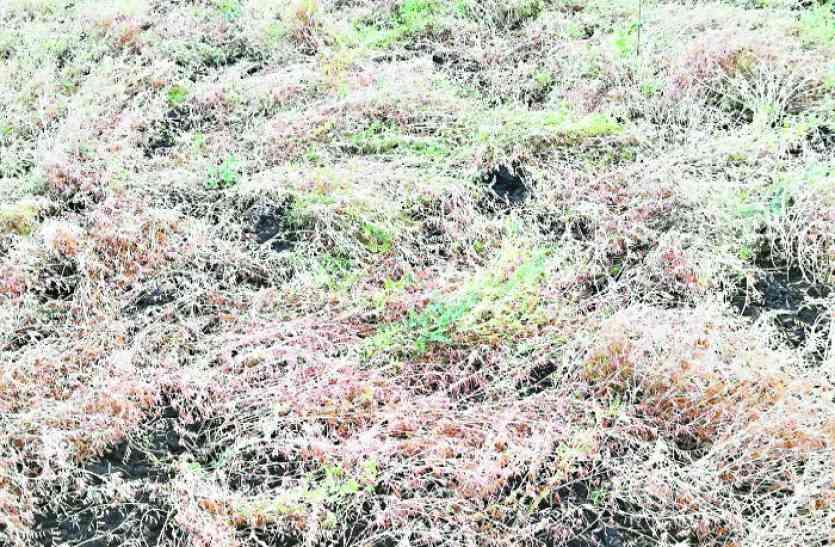 सूखे के बाद किसानों पर मौसम की मार, खड़ी फसल-सब्जियां बर्बाद, अब मुआवजे का इंतजार