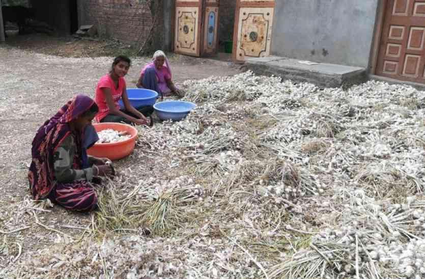 इस फसल को किसानों ने बो तो दिया लेकिन अब रोने को हो रहे मजबूर