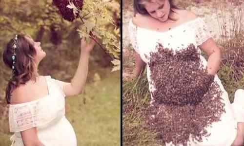 Bizarre News,bizarre world news,bizarre talent,Bees attack,bees,bizarre incident,bizarre behavior,maternity photoshoot,