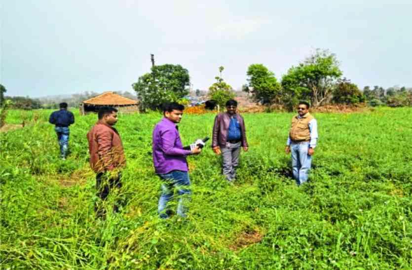 यहां के 93 गांवों के किसानों पर पड़ी आेले की मार