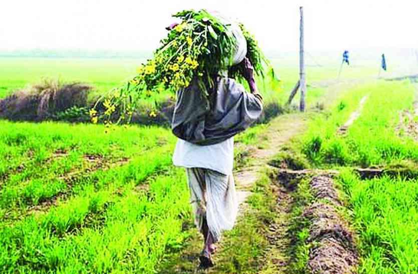 अब किसानों को उम्मीद के मुताबिक मिलेंगे उपज के दाम